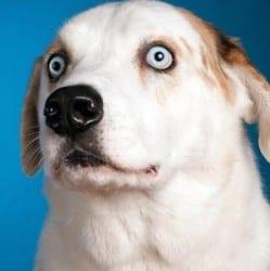 Dog Rates Image